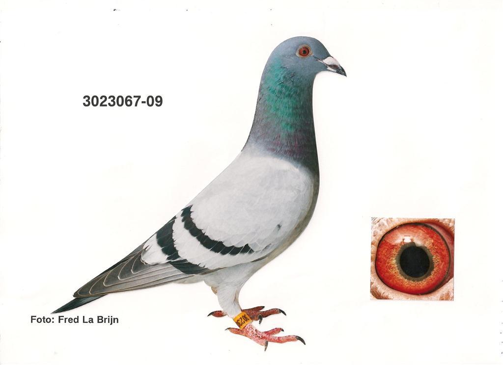09-3023067